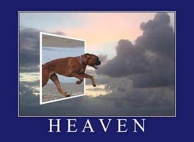 Do Pets Go To Heaven Dog Heaven Pets Dog Love