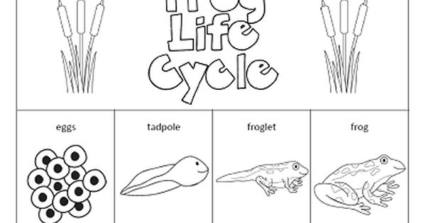 Printables Frog Life Cycle Worksheet 1000 ideas about frog life cycles on pinterest the paper maid cycle httpwww com
