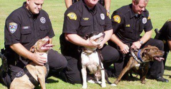 Pitbull Police Dogs 3 And We Think They Are Bad Why