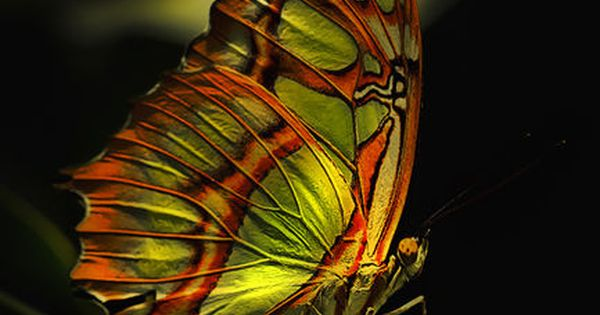 Beautiful Butterfly Reflection. Repinned by An Angel's Touch, LLC, d/b/a WCF Commercial
