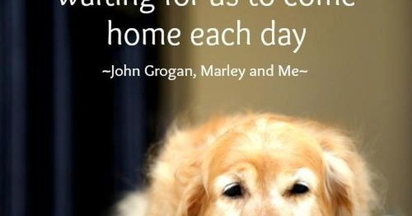 """""""Such short little lives our pets have to spend with us, and"""