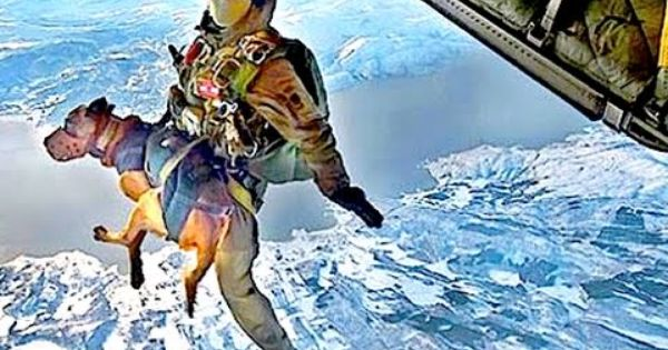 Go Pro Military Us Navy Seals Sky Dive Parachute Aircraft Military Working Dogs Working Dogs Best Dogs