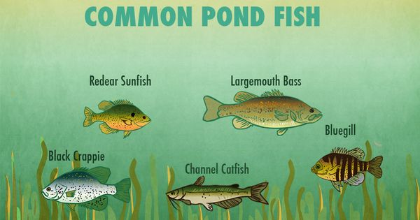 Small pond fishing tips lakes all things and the rules for Pond fishing tips