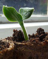 Growing Pumpkins How To Grow The Biggest Pumpkins Growing Pumpkins Planting Pumpkins Planting Pumpkin Seeds