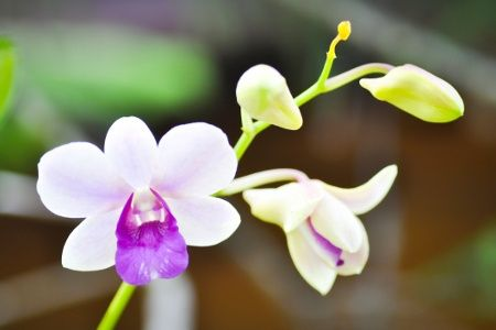 Orchid Flower Meaning And Symbolism A Really Interesting Read Dendrobium Orchids Orchid Meaning Orchids