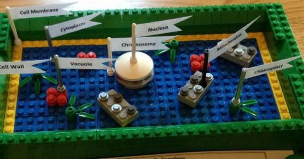 cell membrane project The cell membrane has complete control over the movement and substances in and out of cell underneath the cell membrane is a thick layer of cytoplasm the cytoplasm is a gel-like substance that holds all of the cell.