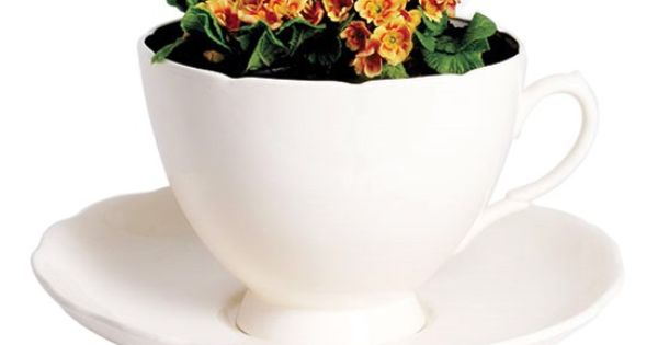 Giant Cup And Saucer Planter By Rume Home Pinterest Planters Product Ideas And Tea Cup Saucer