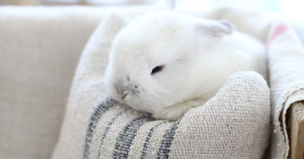 I'd like to have one little white rabbit