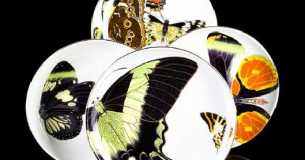 Butterfly Plates That Arent Too Girly For The Home Pinterest Porcelain