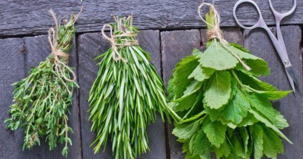 Cuisine comment faire s cher les herbes aromatiques comment - Comment conserver du basilic ...