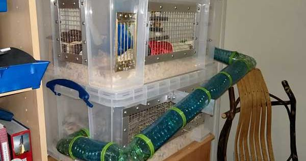 2 story bin hedgehog cage hedgehogs rats pinterest for Making a c c cage