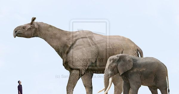 Indricotherium - the largest land mammal that ever lived ...