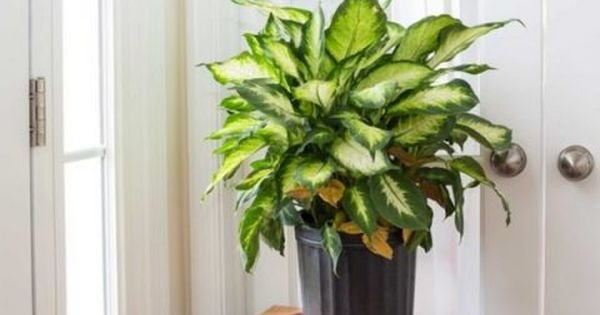 Common Flowers That Are Toxic To Pets Toxic Plants For Cats Indoor Plants Pet Friendly Propagating Plants
