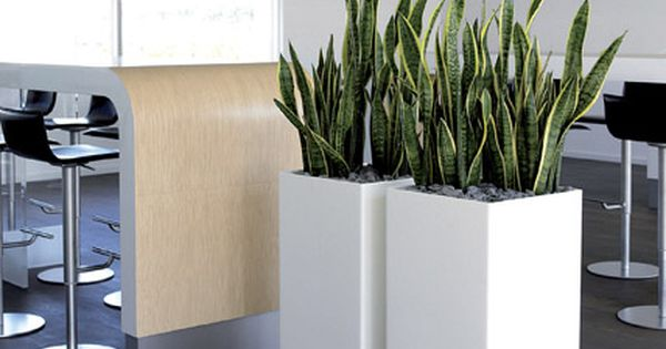 Homes Interior Com This Website Is For Sale Homes Interior Resources And Information Indoor Plants Plants Plant Decor