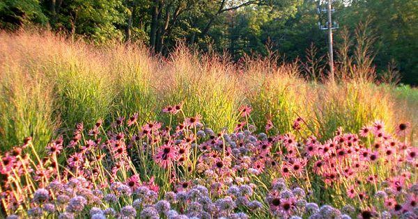 lovisas blog meer piet oudolf fab plant combinations On piet oudolf plant combinations