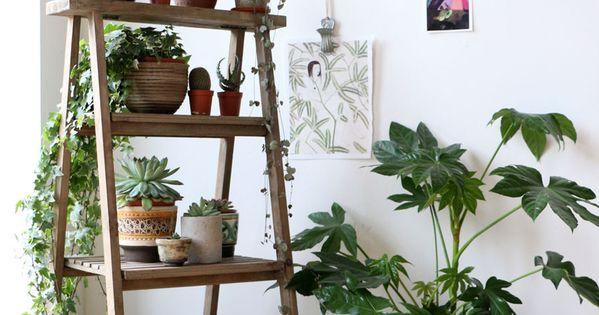 plants casa pinterest planters l gumes et homards. Black Bedroom Furniture Sets. Home Design Ideas