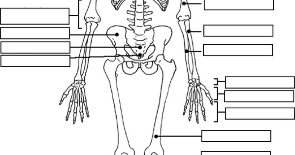 Appendicular Skeleton Labeling Blank