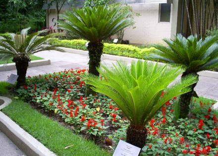 Tudo em flor plantas para jardim que gostam de sol - Plantas exterior mucho sol ...