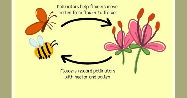 Pin By Eschooltoday On Pollination Elementary Science Pollination Fun Learning