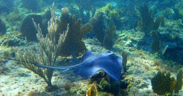 Explore The Beauty Of Caribbean: GREAT EXUMA Bahamas Snorkeling
