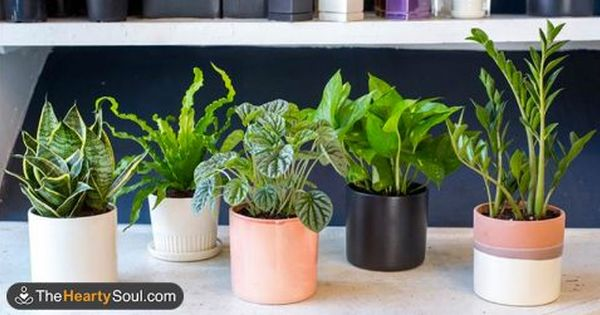 Indoor plants that aid sleep and improve air quality for Indoor gardening near me