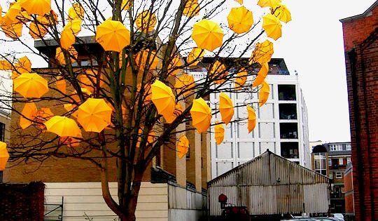 The Umbrella Tree - Urban Art