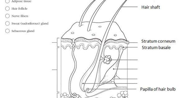 anatomy  u0026 physiology coloring workbook answers