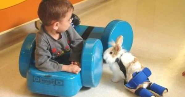 Paralyzed Bunny Helps Children Overcome Their Own Disabilities