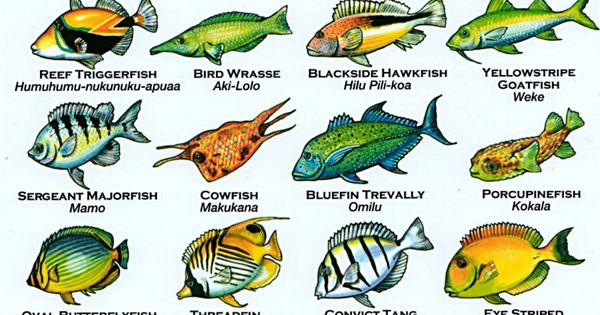 Hawaii's Aquarium Fishery Ban: Call to Action!