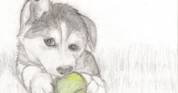 How To Draw Puppy Drawing Love To Draw Dogs So I Drew A Husky