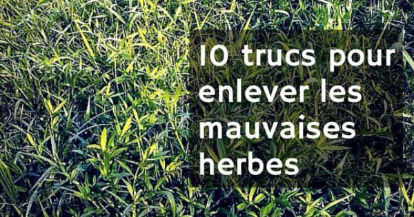 Enlever les mauvaises herbes astuce du jour pinterest for Mauvaises herbes du jardin photos