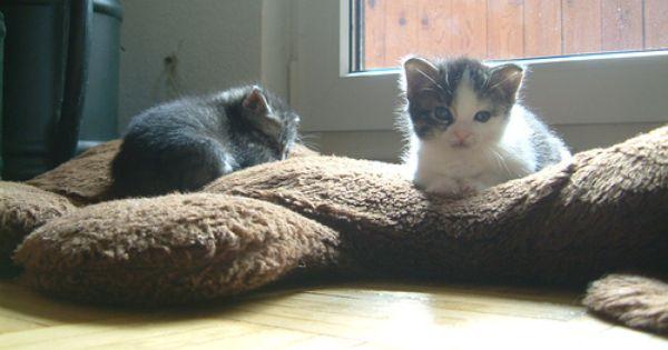 Take Care Of Kittens Kitten Care Kittens Newborn Kittens
