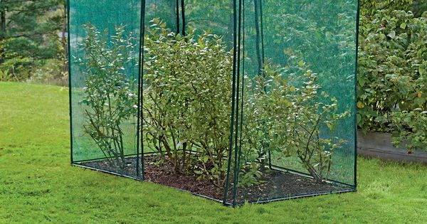 Crop Cage 4 X 8 X 6 Tall Blueberry Bush Covers