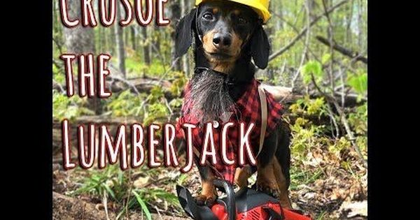 Crusoe The Lumberjack Dogs Dachshund Weenie Dogs