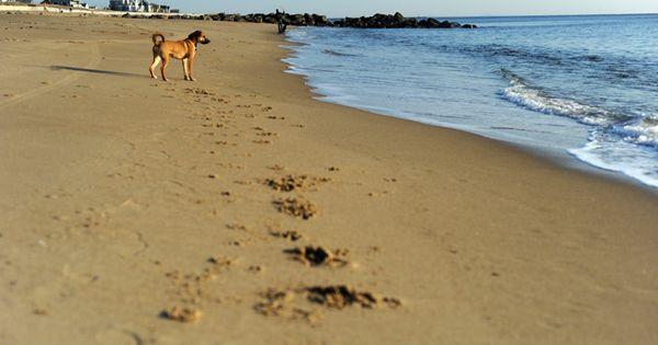 Plum Island Beach Plum Island Beach New England Travel Plum Island