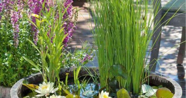 teich mit schilfgr sern in einem fass garten pinterest gardens and garten. Black Bedroom Furniture Sets. Home Design Ideas