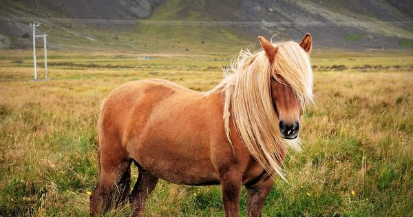 Beautiful Animal, 15 most beautiful horse photos (5)