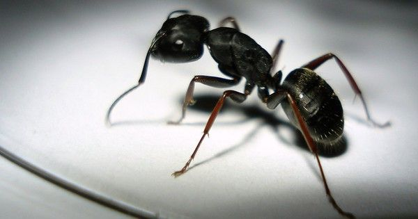 How To Keep Ants Out Of Your House Naturally Ants Get Rid Of