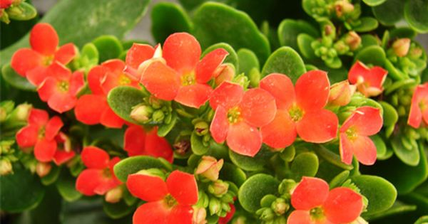 Plantas de interior resistentes interiors patio and hay - Plantas de interior resistentes ...