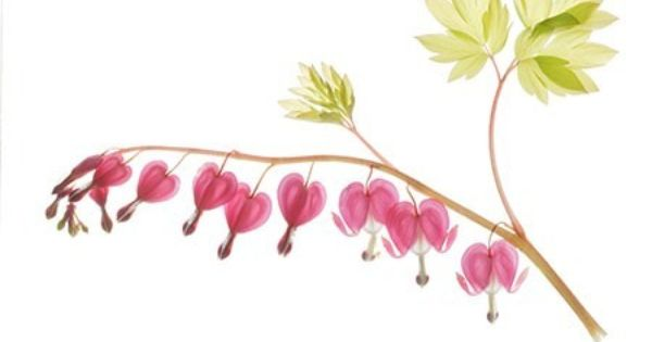 Sweet Pea Art Pressed Flowers Botanical Print Flower Etsy Pressed Flower Art Heart Art Print Heart Canvas Art
