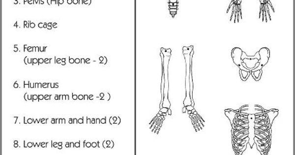 skeleton worksheet | health literacy | pinterest | worksheets, Skeleton