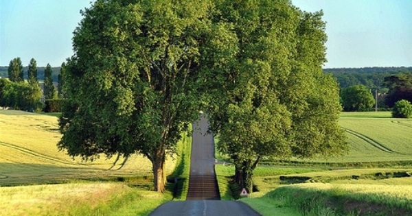 Tree tunnel, France