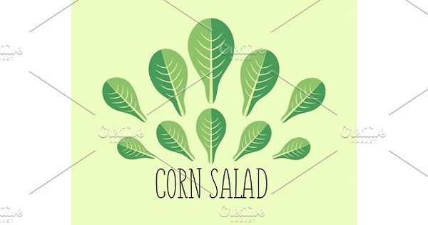 Corn salad leaf vegetable cartoon icon with light green background. by verkelis on @creativemarket