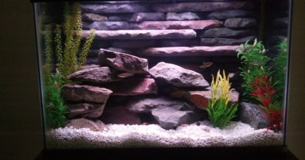 Most Beautiful Freshwater Tanks All Time Page 27 Fresh Water Tank Beautiful