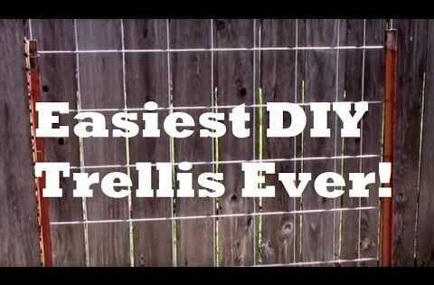 Cheap Diy Vertical Garden Trellis Goes Up Fast This Is A