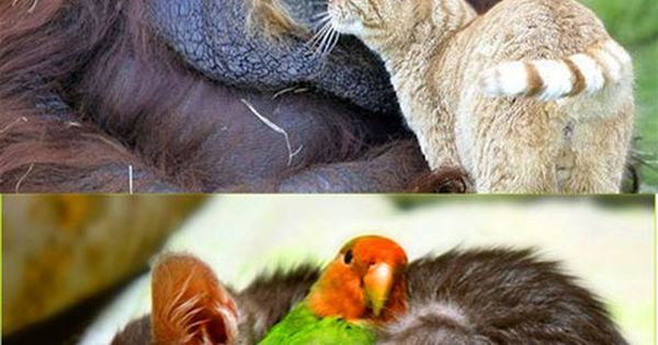Unlikely animal friends :)