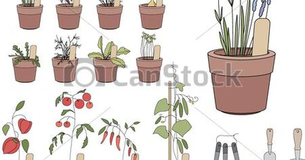 Vector Flower Pots With Herbs And Vegetables Gardening Tools Plants Growing On Window Sills Stock Illustration Royalty F Flower Pots Garden Tools Plants