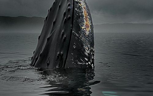 {♥}humpback