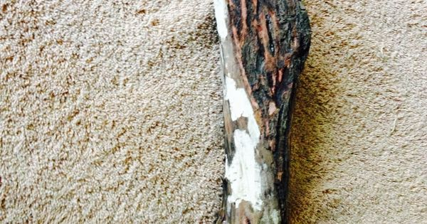 Walking stick canes and walking sticks pinterest - Dry Diamond Willow Not Very Pretty With The Bark On My