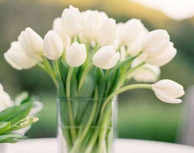 white tulips, center piece